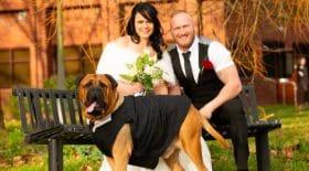 couple avance la date du mariage chien malade