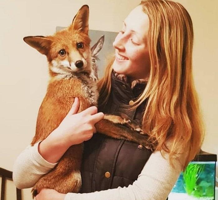 renard-chiens-meilleure-amie