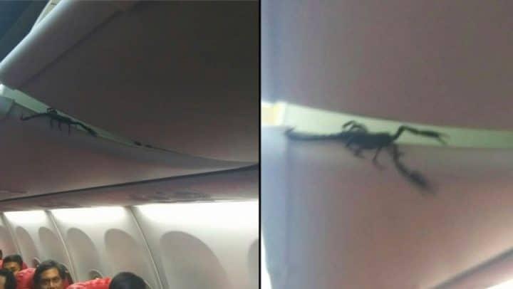 scorpion dans l'avion