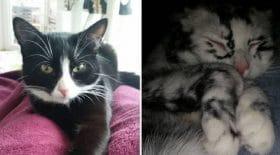tache-chatte-pelage-maladie-rare-vitiligo