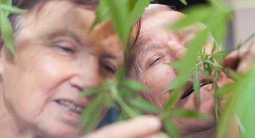 Une maison de retraite donne du cannabis thérapeutique à ses résidents