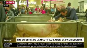 Castaner bisous cochon