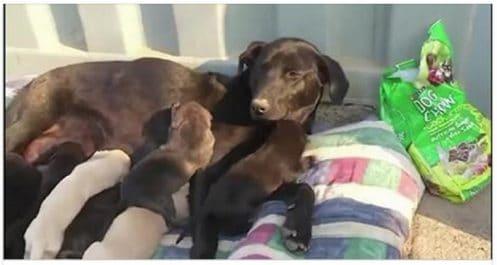 Le bel acte d'amour d'une chienne avec ses chiots