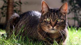 Maltraitance animale : Elle balance son chat par la fenêtre