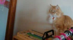 chat-trou-coincé-endroit-improbable