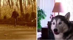 chein-recherche-husky-réaction-surprenante