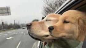chien-aveugle-chiot-amour-âgé