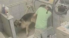 Vidéo choquante : Maltraitance d'un chien