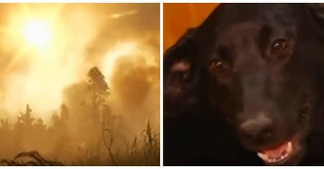 Vidéo bouleversante : Une chienne enterre ses petits durant un violent incendie