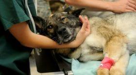 luna-clinique-veterinaire-menace-euthanasier-chien-paie-facture