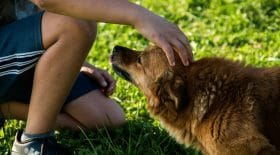 etude-scientifique-perte-chien-ferait-aussi-mal-que-celle-proche