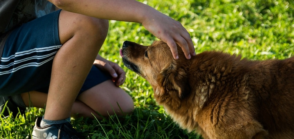 Selon une étude scientifique, la perte d'un chien ferait aussi mal que celle d'un proche