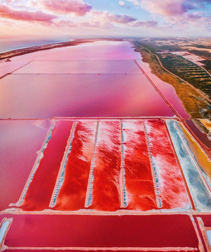 lagoon rose