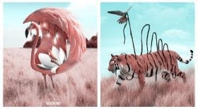 transformation animaux photoshop
