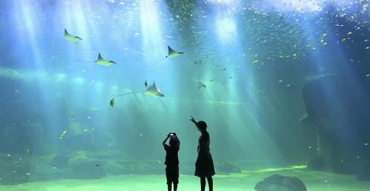 Sea Shepherd va attaquer Nausicaá en justice — Mort de requins