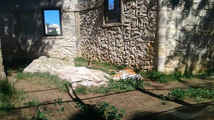 fermeture d'un zoo animaux morts