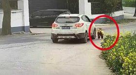 bébé se fait écraser par un SUV
