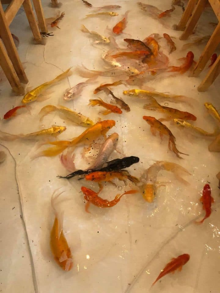 bar à poissons