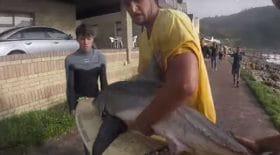ces-surfeurs-sauvent-un-bebe-requin-blanc-dune-mort-certaine-video
