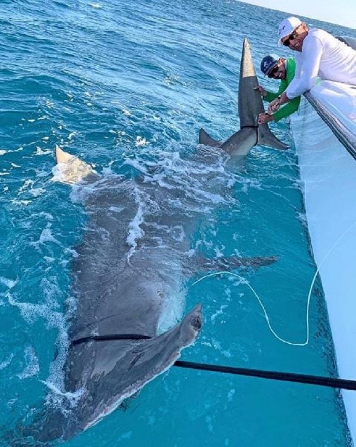 cet-ancien-golfeur-peche-un-requin-de-45-m-de-long-et-qui-venait-den-manger-un-autre