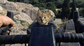 chat abandonné adopté fait tour du monde à vélo