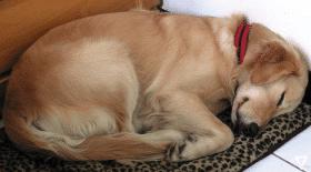 La terrible raison des insomnies d'un chien abandonné