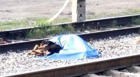 Un chien reste aux côtés de son maître décédé
