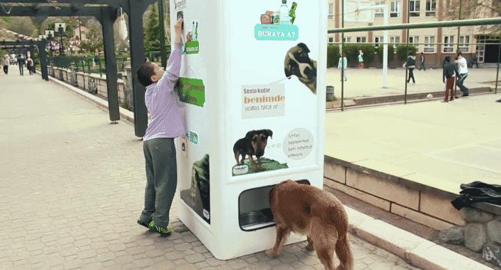distributeur chien