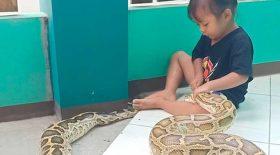 fillette joue avec un python