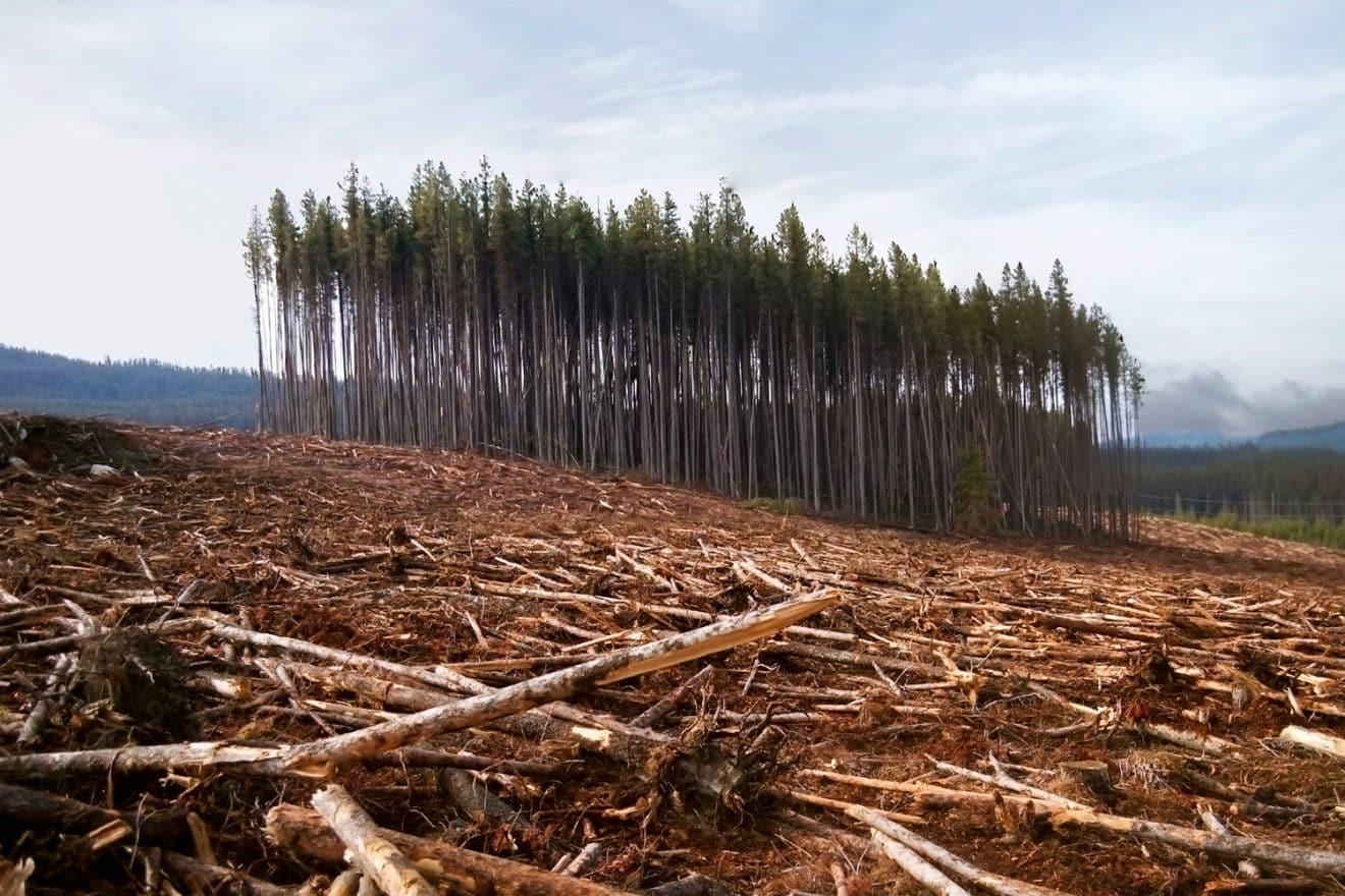 12 millions d'hectares de forêts tropicales ont disparu en 2018, une nouvelle inquiétante pour notre planète