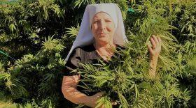nonne bonnes sœurs huile de cbd