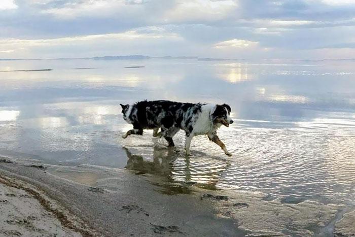 panorama animaux