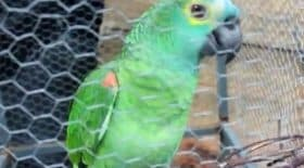 Perroquet dealer