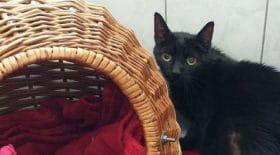 chat-15-ans-est-abandonne-dans-refuge-quand-benevoles-comprennent-pourquoi-ils-decident-de-pousser-coup-de-gueule