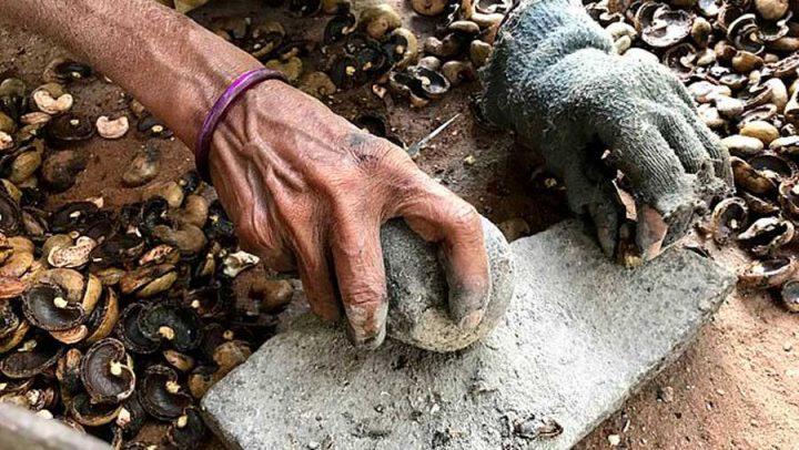 vérité production de noix de cajou