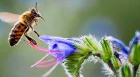 vidéos pornos d'abeilles pornhub