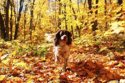 Attention votre chien doit être tenu en laisse en forêt