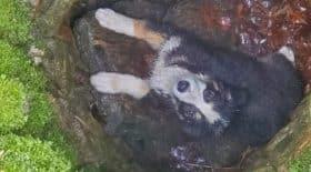 Un chiot tombé dans un puits très profond
