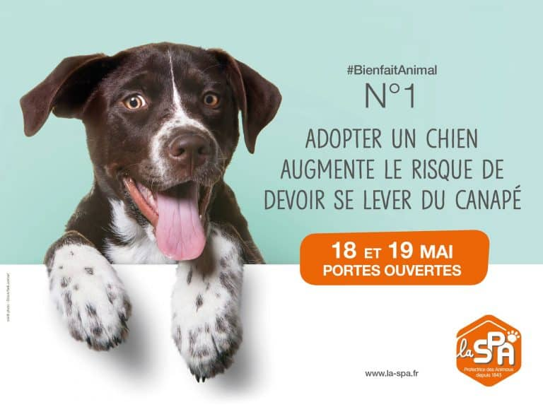 Portes ouvertes SPA : pourquoi il faut adopter un des 4 000 animaux ce week end ?