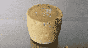 Un fromage créé à partir de bactéries humaines exposé à Londres