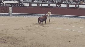 matador-tourne-le-dos-au-taureau-et-se-fait-magistralement-encorne-par