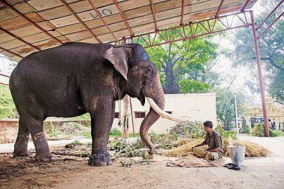 Un éléphant s'écroule au sol et meurt