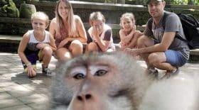 a-bali-un-petit-singe-fait-un-doigt-dhonneur-magistral-sur-une-photo-famille