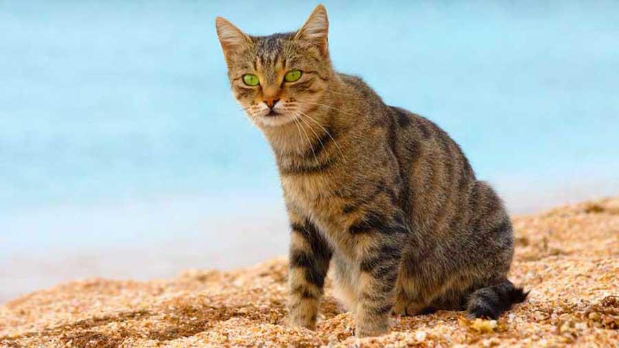 job de r u00eave    u00catre pay u00e9 pour c u00e2liner des chats sur une  u00eele paradisiaque