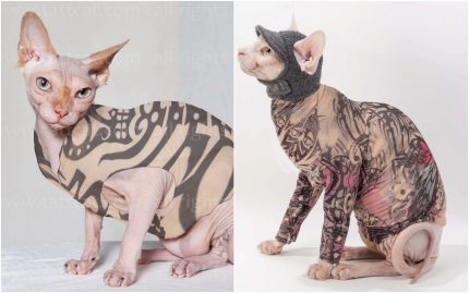 chat tatouage