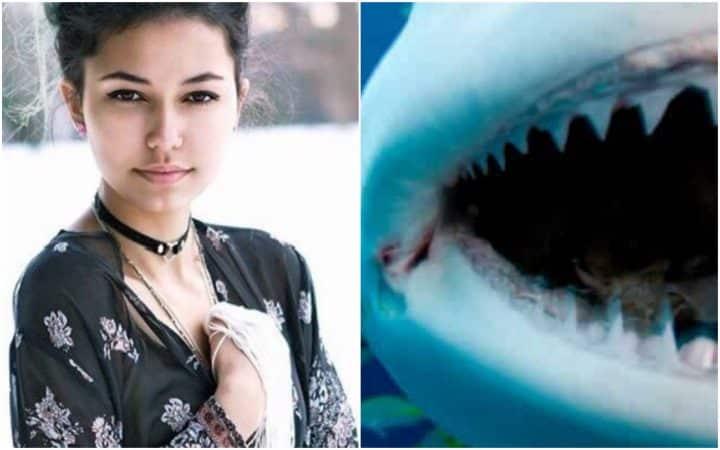 sauvetage requin