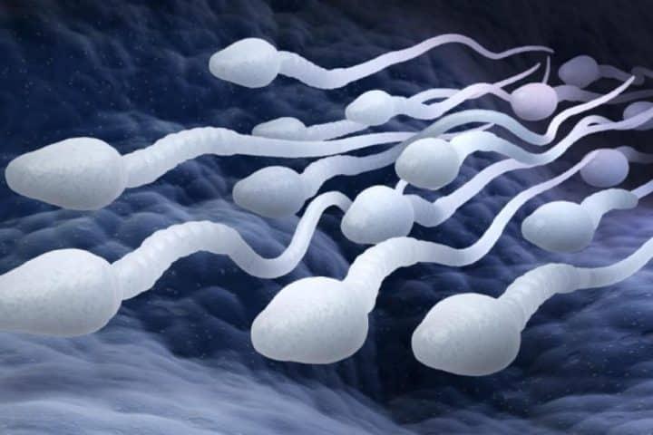 sperme