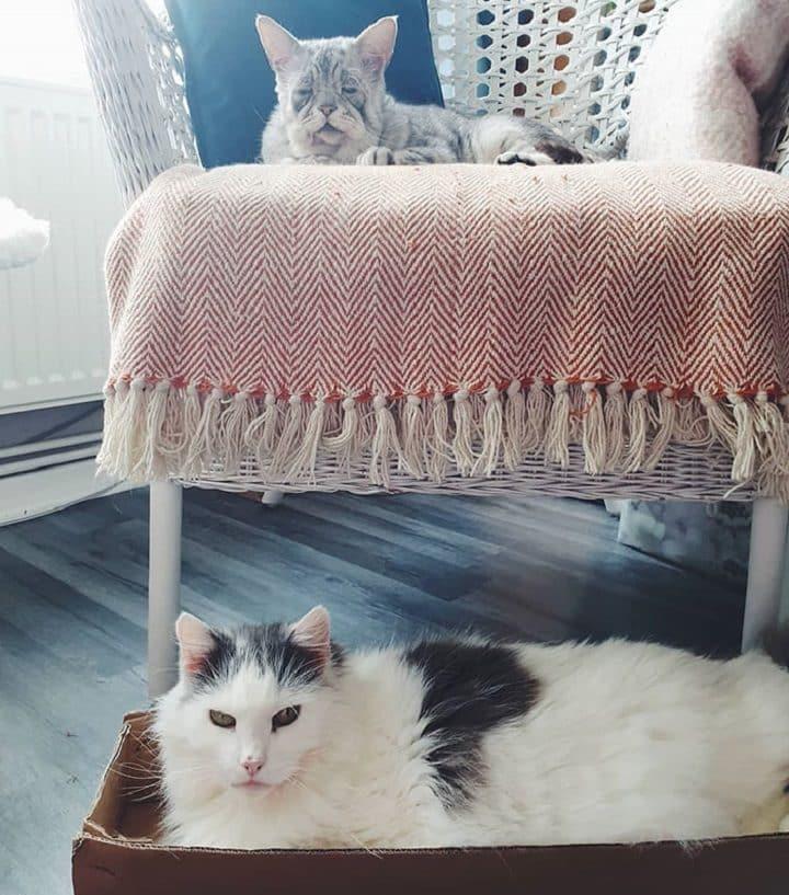 un-chat-pas-comme-les-autres-trouve-enfin-une-famille-daccueil