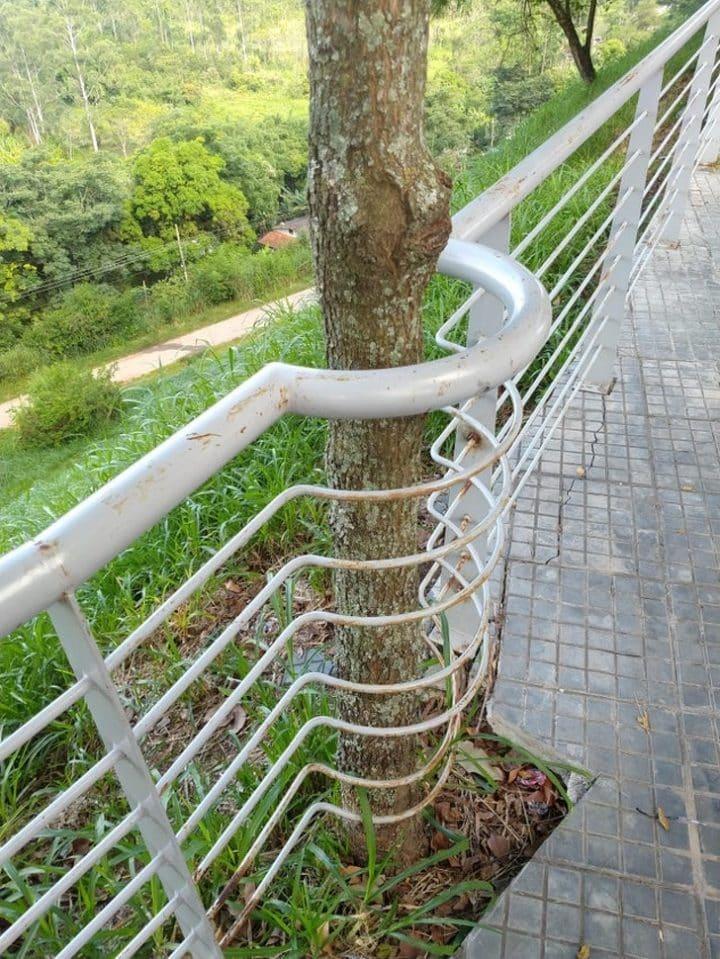 arbre clôture