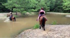 cheval très peur eau